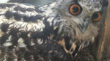 Staff stunned as 'male' owl lays an egg after 23 years at sanctuary