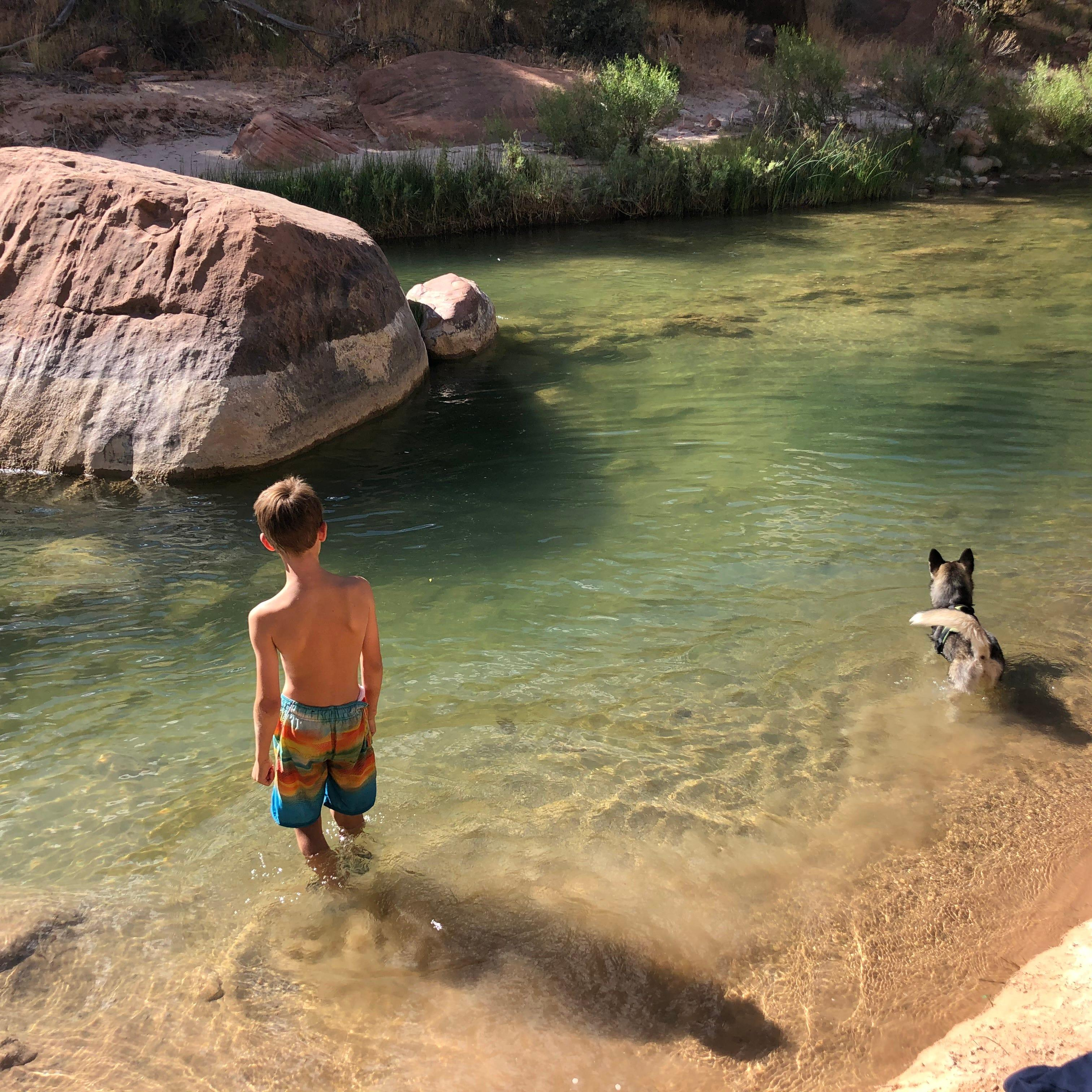 Puppy dies at Zion National Park in toxic algae bloom that is dangerous to humans, animals