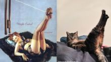 These cats posing as pin up girls are absolute purrfection