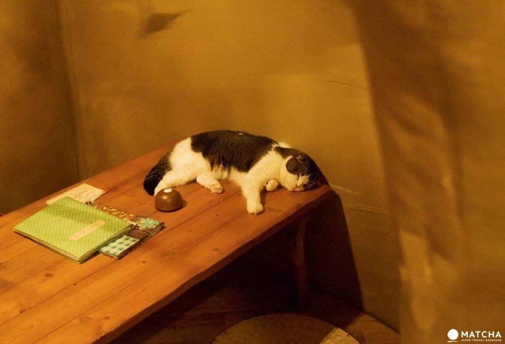 CatCafe てまりのおうち