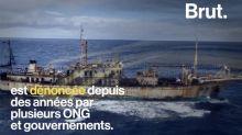 Au large des îles Galápagos, une flotte géante chinoise de pêche épuise les ressources de l'archipel