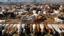 Indonesia live cattle ban invalid: court