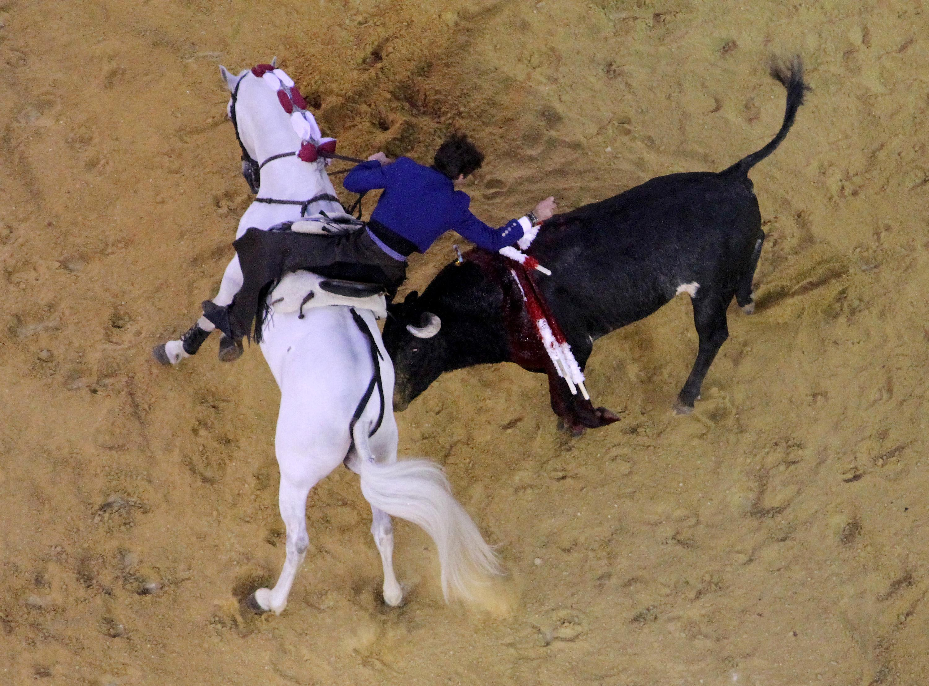 A mounted bullfighter performs during a bullfight at La Santamaria bullring in Bogota, Colombia, on January 23, 2011