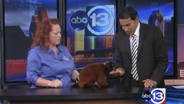 Special guests from Sea World visit ABC13 studios