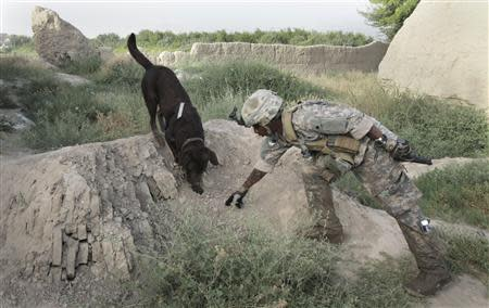 Dog handler Sergeant Justin McGhee of the US Army's 67th Engineer Detachment works with his dog Archie as they search for buried munitions near the village of Khersak in Arghandab District in this file photo taken July 9, 2010. REUTERS/Bob Strong/Files