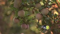 Made in the Valley: Homegrown Organic Farms