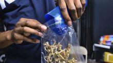 Activists seek to decriminalize 'magic' mushrooms in DC