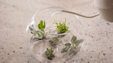 How to Make a Terrarium to Keep Succulents Alive