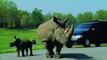 Six Flags to Open Its Great Adventure Safari to Private Vehicle Drive-Through on May 30