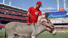 Zack Cozart is bringing the donkey Joey Votto gave him to California