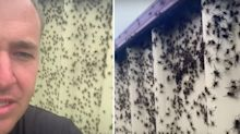 'My worst nightmare': Spider 'plague' reaches terrifying heights