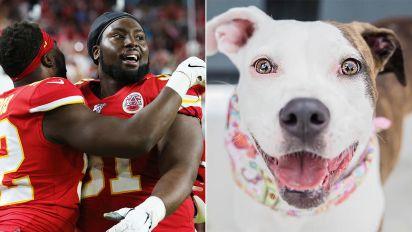 Super Bowl winner's dog adoption gesture