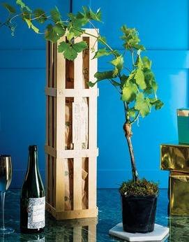 """<p>If you're buying for a green-fingered grandparent, then why not think beyond the usual bedding plants and get them a 'grow your own Prosecco' kit?</p>  <p>These are available for £38 <a href=""""https://www.notonthehighstreet.com/thegluttonousgardener/product/grow-your-own-prosecco-gift-crate?force_locale=en-GB&gclid=CjwKEAiAyanCBRDkiO6M_rDroH0SJAAfZ4KL-m2piIMyUP9ZplSFMx1Lw16UVJ4DBl53T54CY-ysjBoCyi_w_wcB&dclid=CNbMhcWk59ACFcSnUQodc28DJA"""" target=""""_blank"""">through Not on the High Street</a>, and promise to deliver a healthy grapevine (chosen for its ability to thrive in Britain and deliver grapes within a few years) - plus some personalised labels just in case they ever get to the winemaking stage.</p>"""
