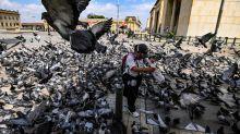 Wegen Corona-Krise: Stadttauben droht vielerorts Hungertod