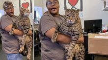 'He's a chonk': Massive cat looking for forever home