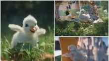【有片】巴黎「迪士尼樂園」廣告超高質 可愛鴨仔尋找唐老鴨