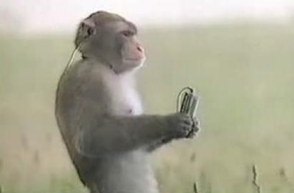 """Sony's Walkman monkey """"Choromatsu"""" passes away at 29"""