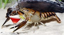 Crayfish get drunk faster when they've been hanging out with friends