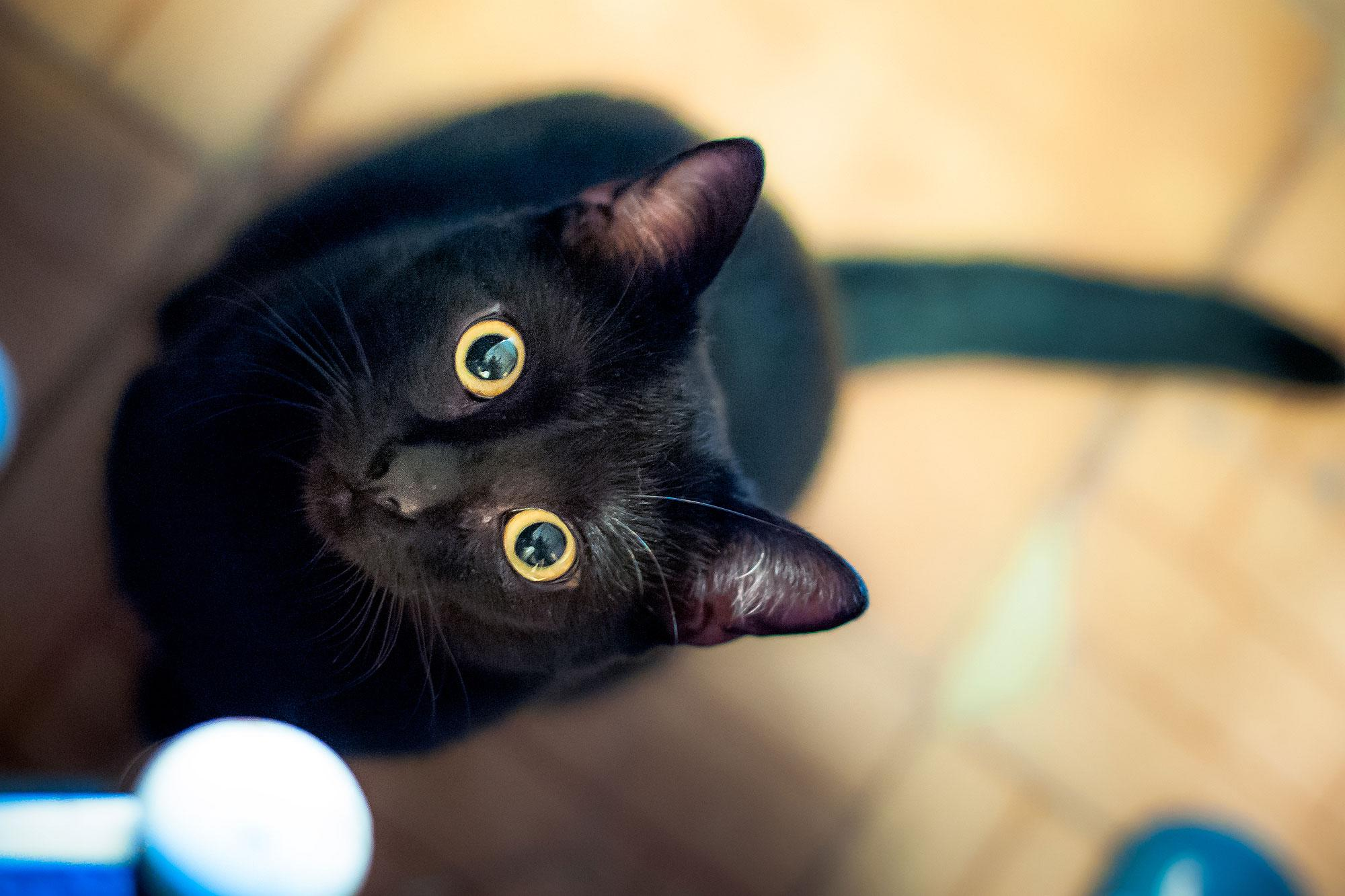 13 Instagram Famous Black Cats That Prove All Kitties Are Beautiful