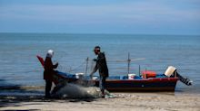 Forget about eating locally caught seafood in Penang once three-island reclamation starts, says fishermen's rep