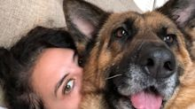 Reporter reflects on Beirut explosion, burying a dog who made 'dystopia more bearable'