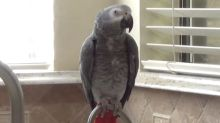 Parrot talks about the squirrels it sees outside
