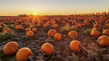We Found the Best Pumpkin Farms to Visit This Fall