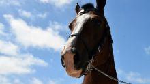 Un nouveau cheval retrouvé mutilé, le premier cas signalé en Ille-et-Vilaine