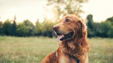 Unglaublich, aber es gibt jetzt DNA-Tests für Hunde