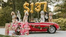 Bells Will Be Ringing, Tails Will Be Wagging: Pet Owners to Spend an Average of $137 on Furry Friends During Holidays