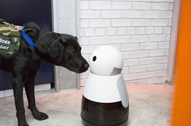 Say goodbye to the company that made the cute Kuri robot