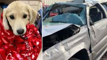 Puppy who disappeared from car crash found almost two weeks later