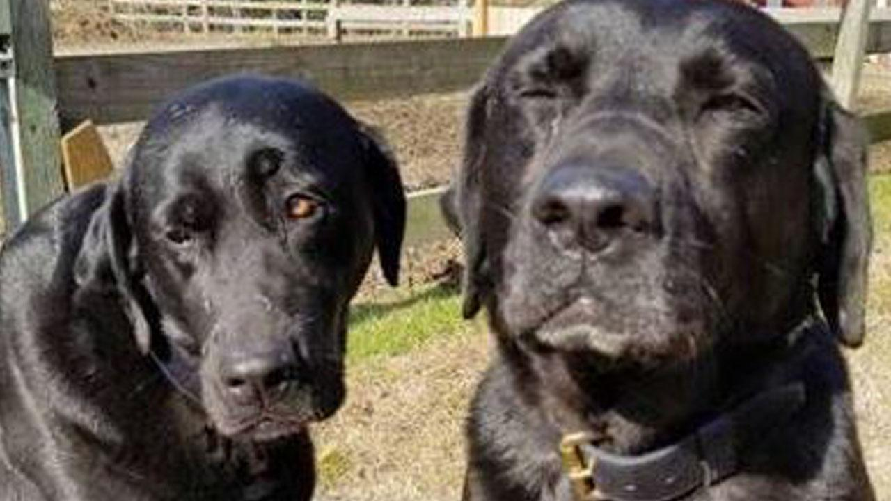 Dogs 'Write' Note to Mail Carrier Apologizing for Eating Her Lunch