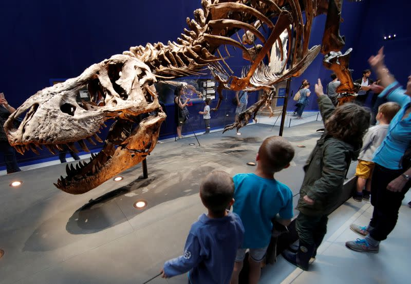 Keeping up with T. Rex was easy, Dutch researchers say
