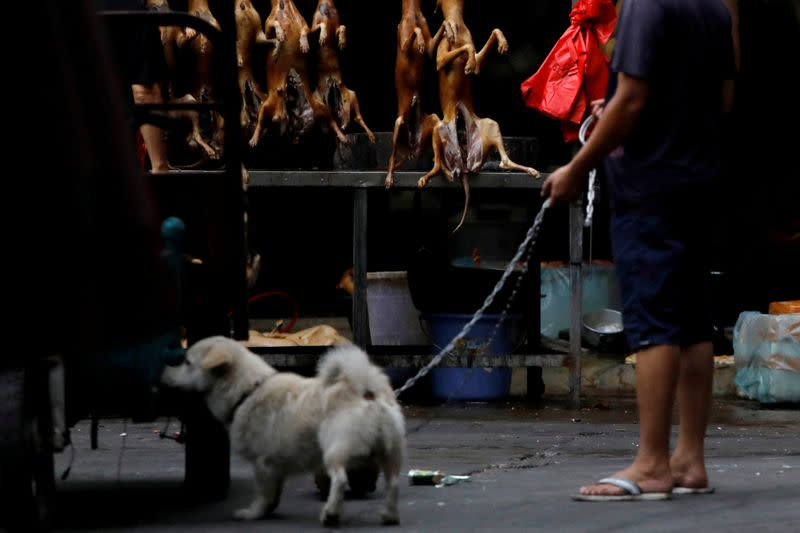 China Reclifies Dogs As Pets Not