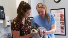 Vet care during COVID-19: What N.L. pet owners need to know