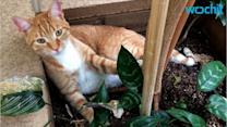 Drug Suspect Escapes by Slipping GPS Unit on His Cat