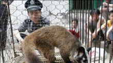 China verbietet wegen Coronavirus vorübergehend Wildtierhandel