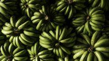 Bulgaria seizes cocaine smuggled in banana shipment