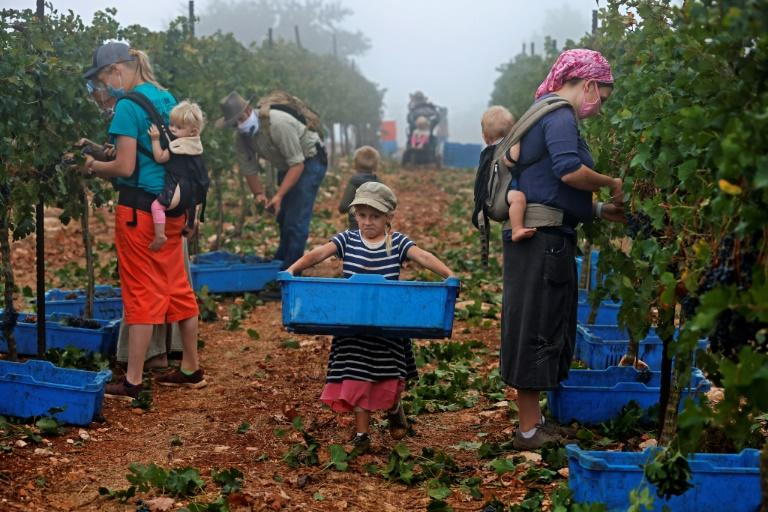 Settlement wine has fallen foul of 2015 EU guidelines on labelling products to identify them as coming from the occupied territories rather than Israel