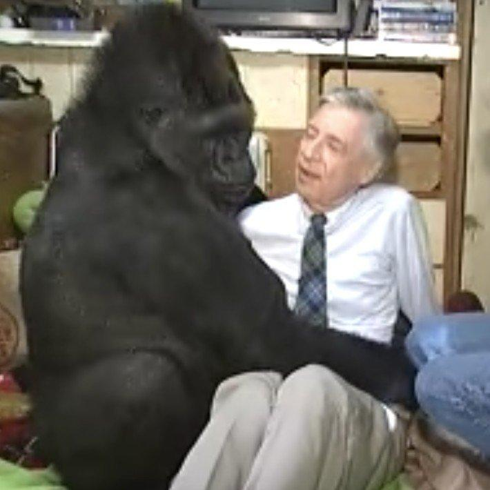 Koko the Gorilla's Meeting With Mister Rogers Is the Most