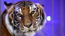 """""""On va se battre pour garder nos animaux"""", la colère des professionnels du cirque itinérant"""
