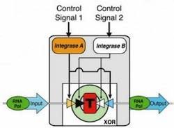 Stanford researchers create genetic transistors, make biologic computing possible