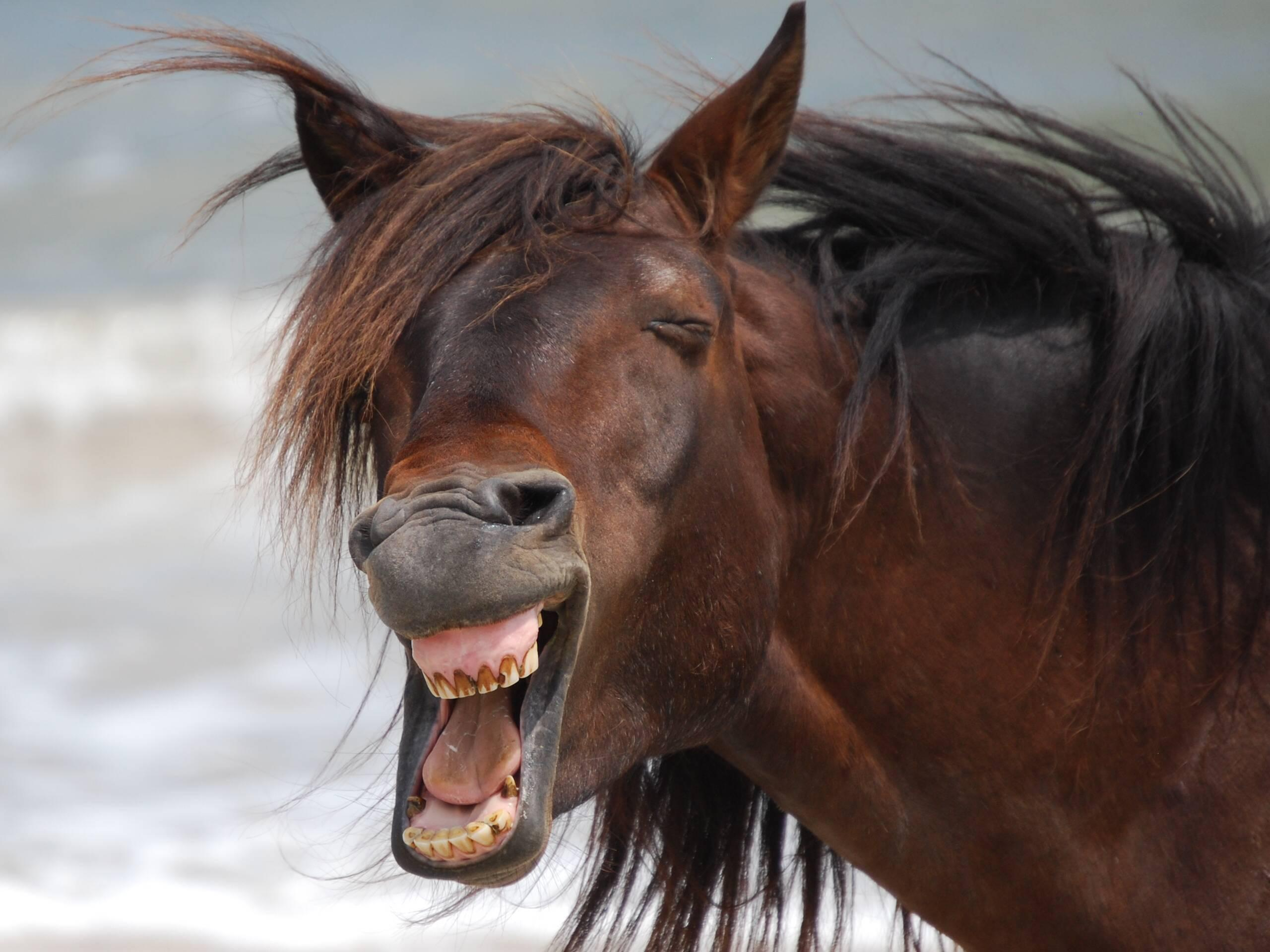 Картинки открытки, прикольные картинки про лошадь