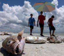 Red Tide sparks state of emergency in Florida as turtles, porpoises, and sharks wash ashore dead