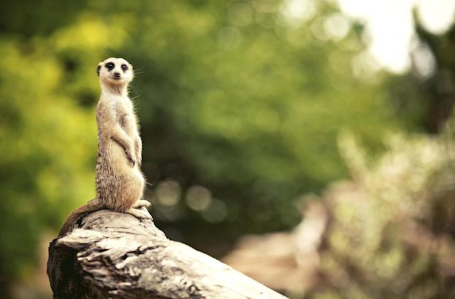 Meerkat the livestreaming app is no more