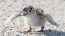 La imagen de una cría de ave con una colilla que debería avergonzarnos