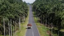 Malaysia palm growers warn new Sabah virus restrictions could halve output