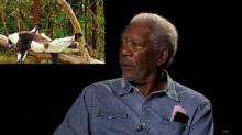 The Morgan Freeman Critter Cute-Meter: How Lemurs, Penguins and Dolphins Compare