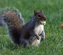 Colorado squirrel tests positive for bubonic plague, health officials say